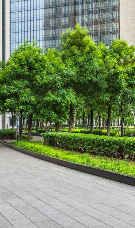 White Leaf Landscaping Commercial Grounds Maintenance