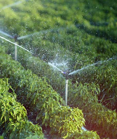 White Leaf Landscaping Irrigation System Repair