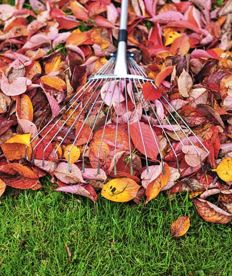 White Leaf Landscaping Fall Clean Up