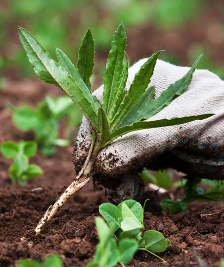 White Leaf Landscaping Weed Control services